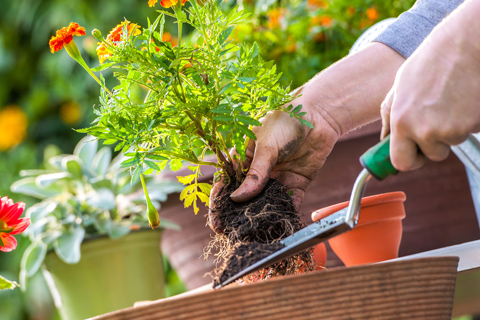 Green Spaces Maintenance